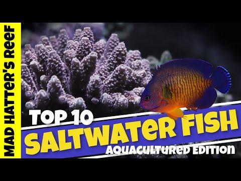 Top 10 Aquacultured Saltwater Fish