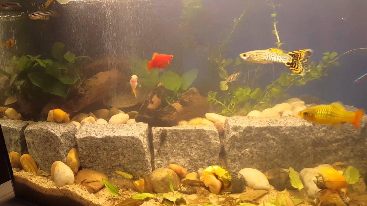 Aquarium Mit Terrasse Und Aufzuchtbecken Youtube