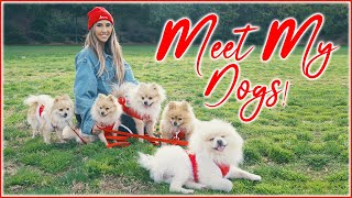 MEET MY DOGS ALL 10 OF THEM (They will melt your heart) | BrittanyBearMakeup