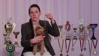 Безопасное поведение при встрече с собакой. Видеоурок для детей 7-11 лет.