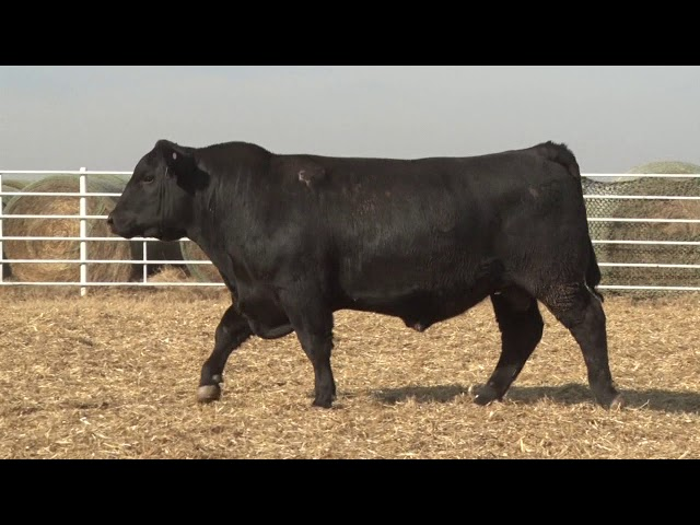 Express Ranches Lot 298