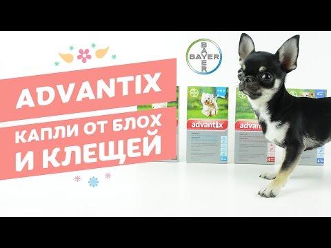 Капли от блох и клещей Bayer Advantix | Адвантикс для собак