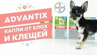 Капли от блох и клещей Bayer Advantix | Адвантикс для собак(, 2017-03-28T11:00:03.000Z)