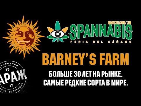 Интервью с Антонио, представителем сидбанка Barney's Farm. Гараж на Spannabis Barcelona 2018