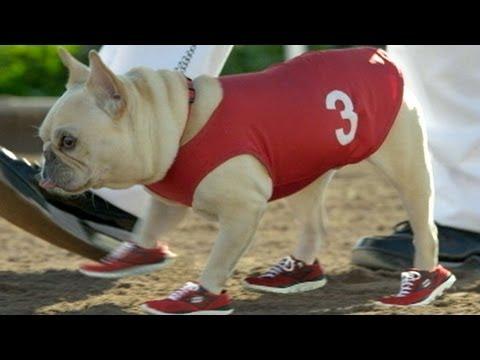 Super Bowl Commercials 2012: Kim Kardashian's Sketcher Replacement, Mr. Quiggly, Visits 'GMA'