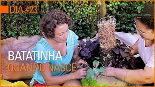 INACREDITÁVEL: raiz de batata-doce comprada na feira vira esse vaso LINDOOOO