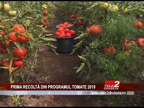 PRIMA RECOLTĂ DIN PROGRAMUL TOMATE 2019
