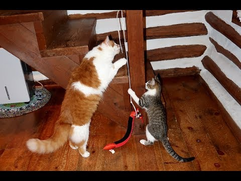 Life With Fun and Funny Kitten and Cat