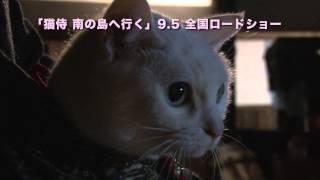 さらば、サムライ。 映画『猫侍 南の島へ行く』9月5日(土)全国ロードシ...