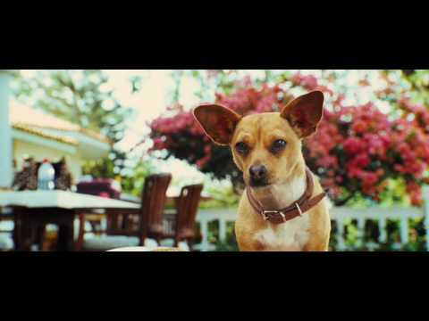Le Chihuahua de Beverly Hills - Bande-annonce (Jamel Comedy Club)