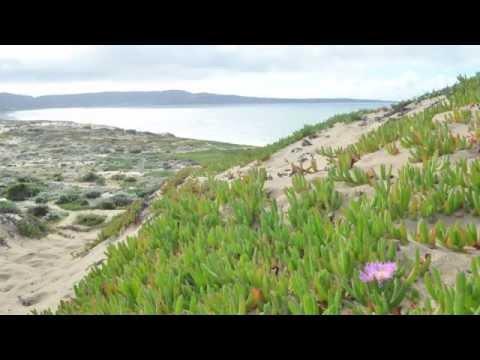5035 Beach Wood Seaside, California 93955