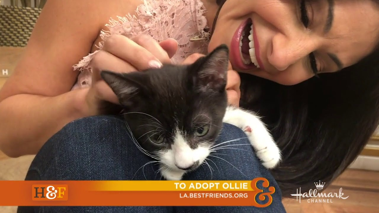 Ollie the Kitten in CA