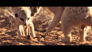 The Meerkats Mirket Ailesi Belgeseli izle -