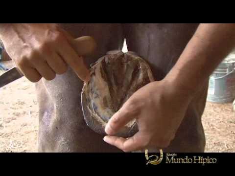 El hongo de la piel en los pies los síntomas