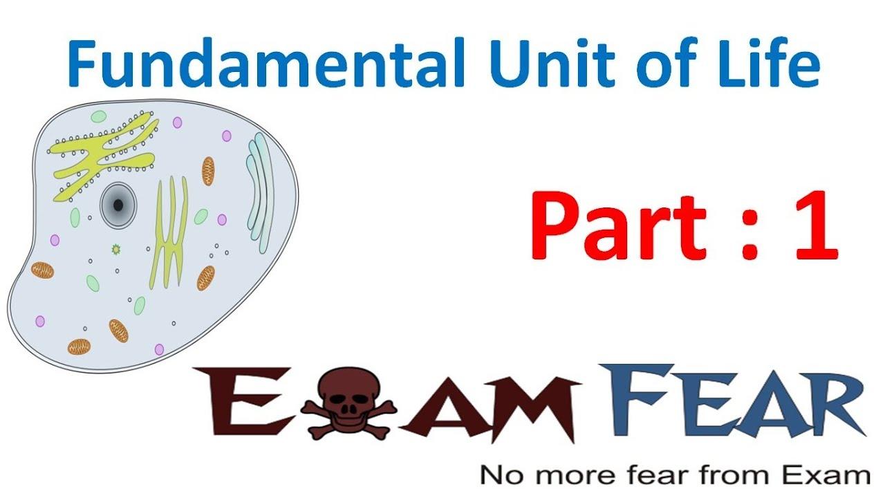 exam fever series life sciences 11