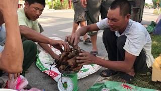 Chợ CHUỘT ven đường || Ngày kiếm tiền Triệu công việc ích nước lợi Nhà