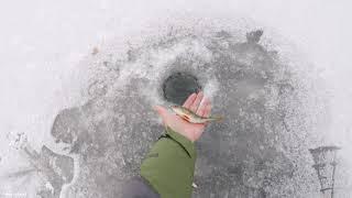 Ташебинский карьер Первый выход на лёд Окунь есть