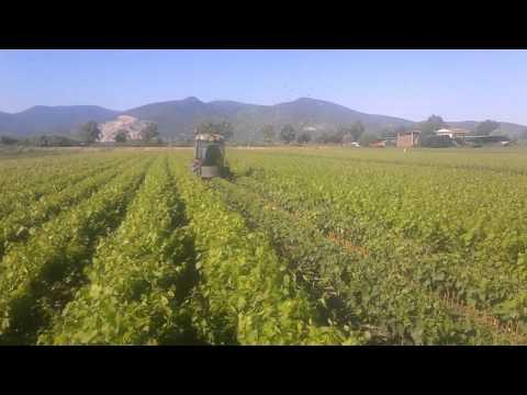 Vivaio Forestale Masone : Agrifor vivaio forestale a masone youtube