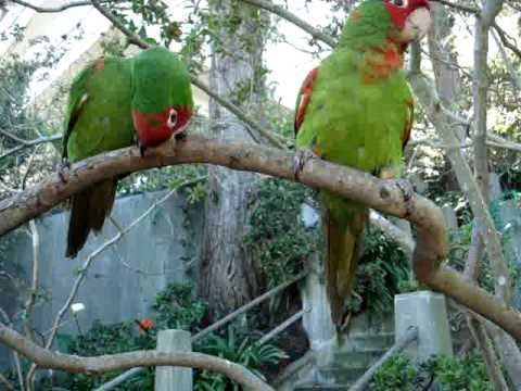 Feeding wild parrots of telegraph hill