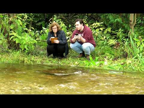 Salmon Spawning In Lowville Park