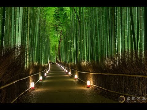 Bamboo in Japan Japanology