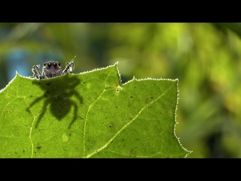 Lens of Time: Spider Seduction | bioGraphic