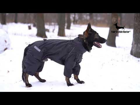 Собака в одежде. Нужно ли одевать собаку? Комбинезон дождевик для собак крупных и средних пород.