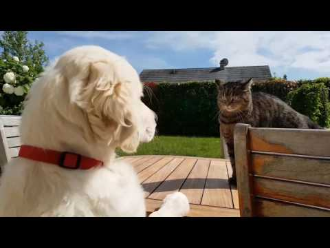Dog VS Cat - Marley et Rebelle