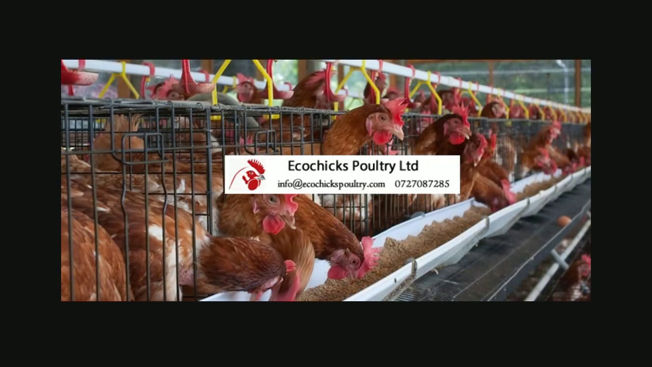 Training on Layers Poultry Farming in Kenya Part 1