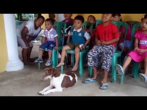 Lucu Zefa Ke Sekolah Minggu Bawa Telur Dan Anjing Moli