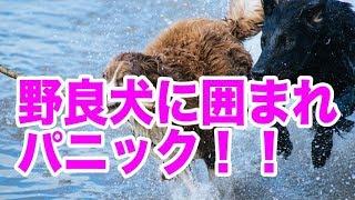 野良犬に囲まれた時 昔奈良の山奥に住んでたんだけど、 天然ホタルが生...