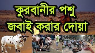 Bangla Waz Qurbani  Poshu Jobai Korar Doa by Imamuddin bin Abdul Basir