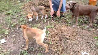 Puppy Bella 3