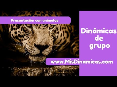 🥇Dinámica de presentación  Con un animal #risoterapia #dinamicas #teambuilding