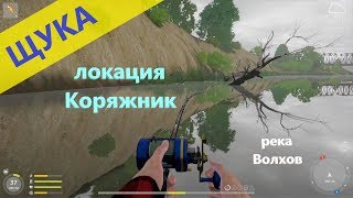 Русская рыбалка 4 река Волхов Щука под корягой
