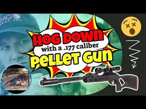 Pigman Shoots Pig in Brain with Gamo Air Rifle!! from YouTube · Duration:  4 minutes 18 seconds