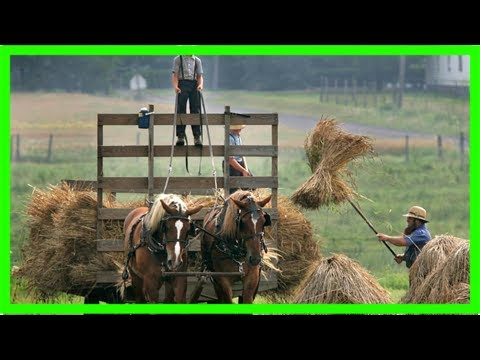 Amish may hold secret to longer life, as scientists find anti-ageing gene