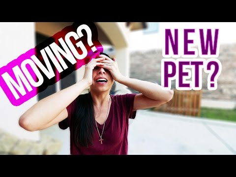 DOG VLOG: Are We Moving? + New Pet (Mavic Drone First Flight!)