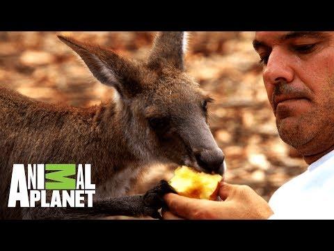 Frank comparte con canguros y emus | Wild Frank: Tras la evolución de las especies | Animal Planet