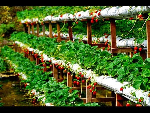 PROFITABLE HYDROPONICS & ORGANIC FARMING IN INDIA - DON'T MISS