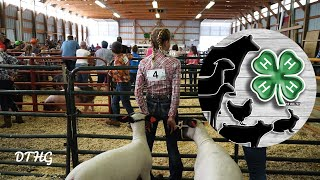 4-H Livestock Show And Market Auction