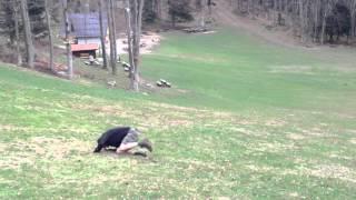 RBerg performs a Croatian Troll Roll