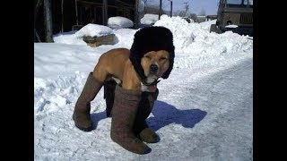 Это Россия детка. Русские приколы, фото.