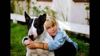 English Bull Terriers From Germany