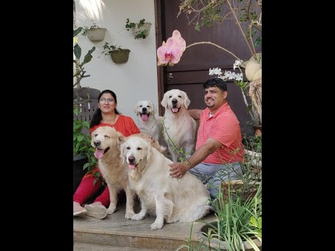 Top Golden Retriever and Husky Breeder in India II Happy Minds Kennel II Tailwaggers