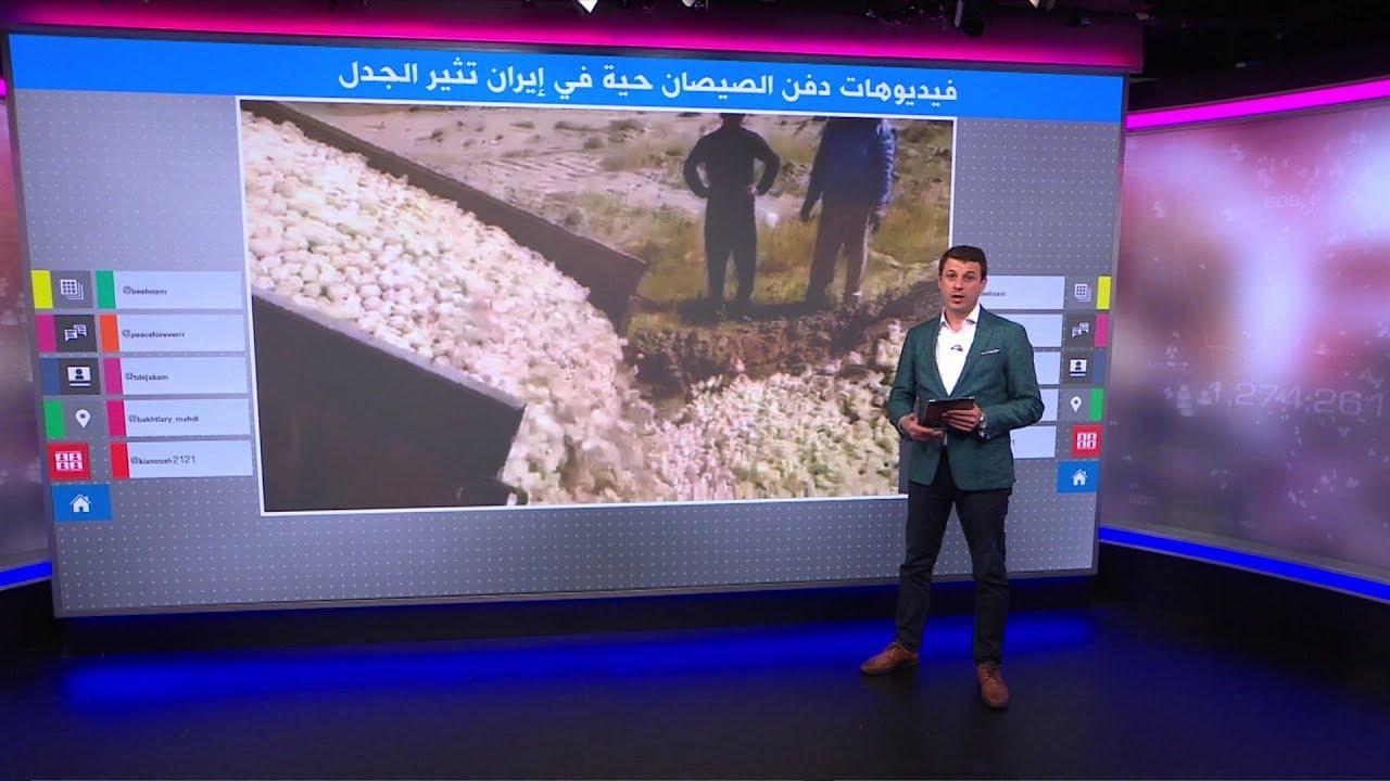 فيديو مؤلم..دفن ملايين الصيصان حية في إيران، تعرفوا على الأسباب