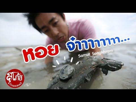 """สุโก้ยไทยแลนด์ """"หอยจ๋าาาาา"""" (คลองโคน) SUGOI THAILAND Ep.29"""