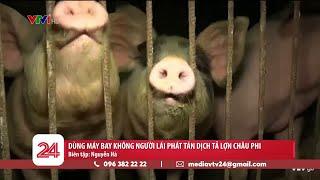 Dùng máy bay không người lái để phát tán dịch tả lợn châu Phi tại Trung Quốc