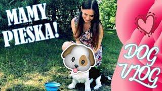 Mamy Pieska! | DOG VLOG