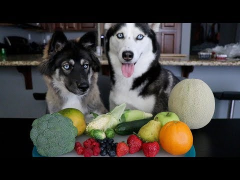 Will My Huskies Eat Their Fruits & Veggies?